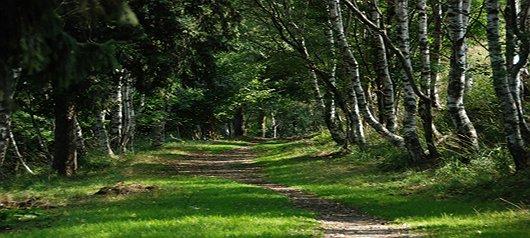 """Riforestazione delle aree boschive: la proposta di """"Samarate al centro"""" per la rinascita dei boschi"""